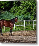 Beauty Of A Horse Metal Print