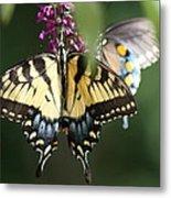 Beauty Of Butterflies  Metal Print