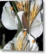 Beauty Untold Metal Print