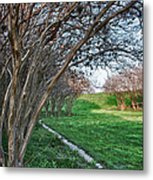 Beauty Without Blossoms Metal Print