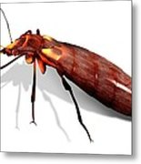 Bed Bug, Artwork Metal Print