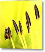 Bee A Little Different Metal Print