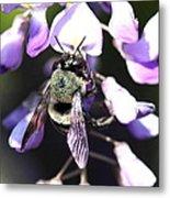 Bee And Blooms - Card Metal Print