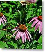 Bee And Flower Metal Print