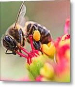 Bee At Work Metal Print