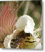 Bee Break Metal Print