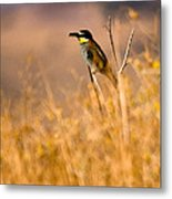 Bee Eater With Insect Metal Print