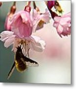 Bee Fly Feeding 2 Metal Print
