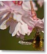 Bee Fly Feeding 8 Metal Print