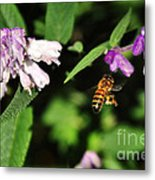 Bee In Flight Metal Print by Kaye Menner