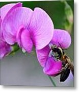 Bee In The Pink - Greeting Card Metal Print