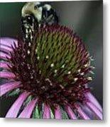Bee Life 1 Metal Print