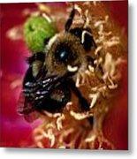 Bee Life 2 Metal Print