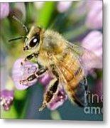 Bee On A Flower Metal Print