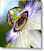 Bee On A Nigella Metal Print