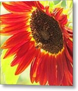 Bee On A Sunflower Metal Print