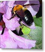 Bee On Azalea Bloom Metal Print by Lisa Phillips