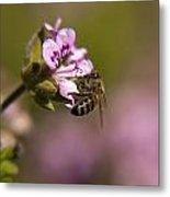 Bee On Flower Blooming Metal Print