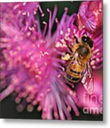 Bee On Lollypop Blossom Metal Print