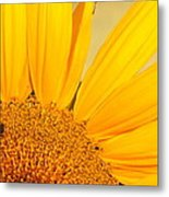 Bee On Sunflower Metal Print