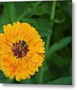 Bee On Yellow Flower Metal Print