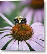 Bee Resting Squared Metal Print