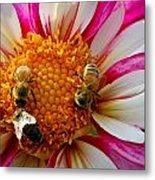 Bee Time Metal Print