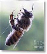 Bee Web Metal Print