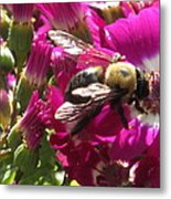 Bee With Cinearia Metal Print