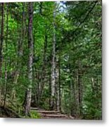 Beech Mountain Trail Acadia Metal Print