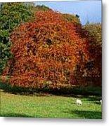 Beech Tree, Glendalough, Co Wicklow Metal Print
