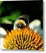 Beeing Healthy With Echinacea Pow Wow Metal Print