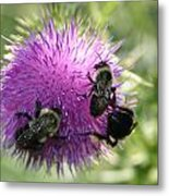 Bees On Thistle Metal Print