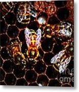 Bee's Work Metal Print by David Taylor