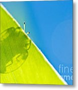 Beetle And Blue Sky Metal Print