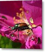 Beetle Metal Print