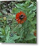 Beewildered By Red Metal Print