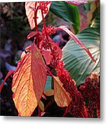 Before The Frost Metal Print