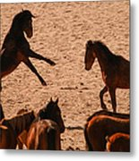 Before The Herd Metal Print