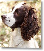 Before The Hunt - English Springer Spaniel Metal Print