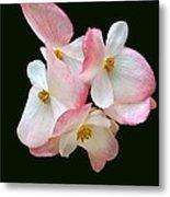 Begonia Flower Gems Metal Print