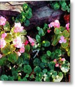 Begonias By Stone Wall Metal Print