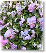 Begonias In Bloom Metal Print