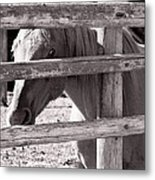 Being Cautious Metal Print