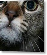 Bella Metal Print by Heather  Boyd