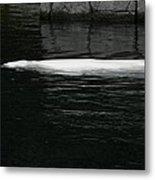 Beluga Impressions 1 Metal Print