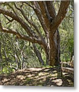 Bench And Tree In Cambria II Metal Print