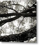 Beneath The Old Apple Tree Metal Print