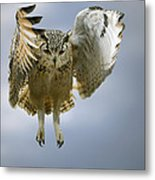 Bengalese Eagle Owl In Flight Metal Print