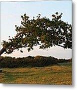 Bent Tree Metal Print